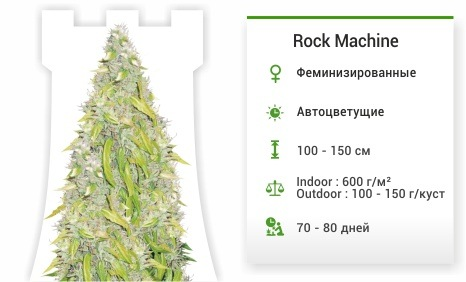 Rock Machine auto (Doctor's Choise)